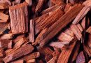 Nepal to send back illegal red sandalwood to India