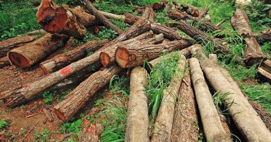 timber smuggling